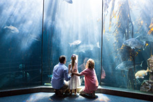 A family watching fish in an aquarium