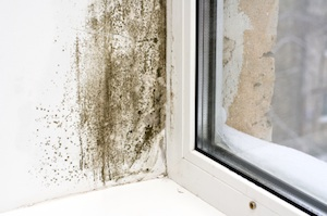 Mold growth near a window in an Arizona home