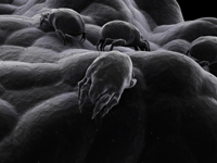 Air quality problems dust mites